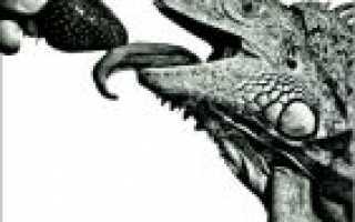 Бурбон «Iguana dreams»